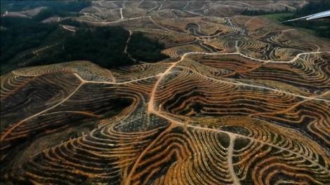 Greenpeace se moque du monde