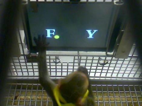 Les macaques ont la bosse des maths
