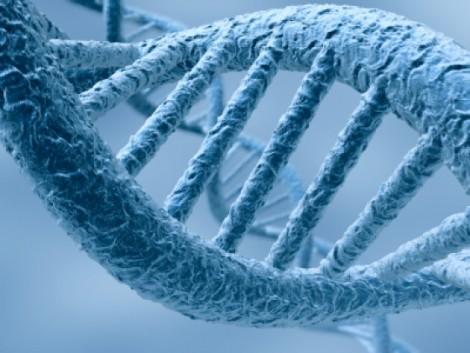 ADN trafiqué passe de 4 à 6 bases