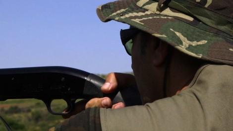 Les sangliers algériens profitent du terrorisme