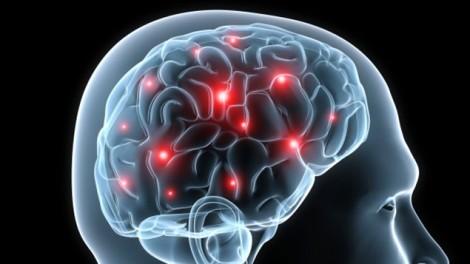 Cerveaux gourmands
