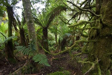 L'Unesco refuse de déclasser des forêts australiennes