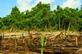 La taxe carbone contre les populations autochtones