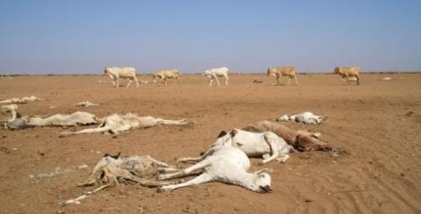 Réchauffement climatique Afrique ONU
