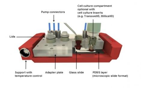 Micro-humains artificiels Tests laboratoire
