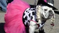 L'Assemblée déclare que les animaux sont «des êtres vivants et sensibles»