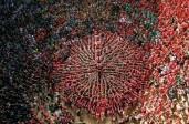 Les photos : Pyramides humaines en Catalogne
