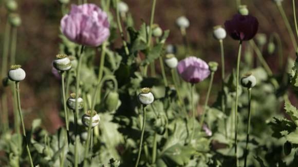 Mexique heroine Etats-Unis opium demande