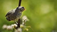 De nouvelles études génétiques sur les pinsons de Darwin posent des questions sur «l'évolution des espèces»