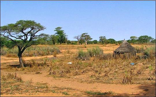 Banque mondiale finance contraception santé génésique Sahel