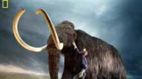 Des chercheurs sud-coréens tentent de cloner un mammouth vieux de 40.000 ans