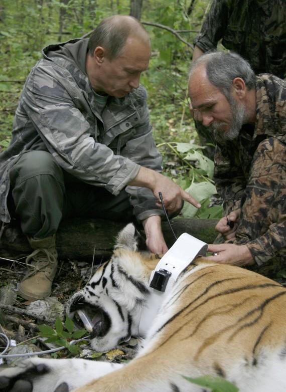 La population des tigres de Sibérie augmente en Russie