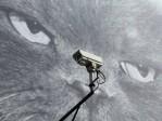 Surveillance: les Etats-Unis installent des GPS, l'Union européenne veut elle aussi contrôler les transports