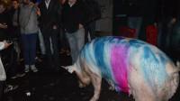 Le marché du porc breton en crise