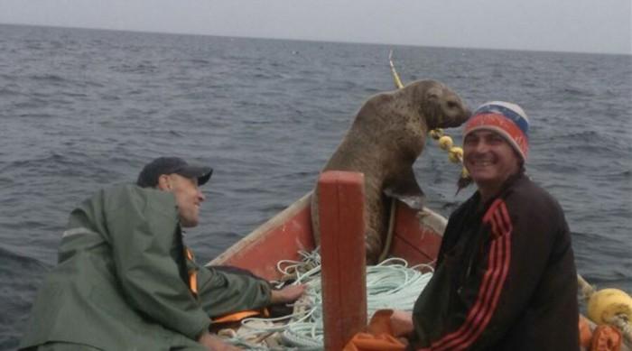 Pecheurs russes phoque grimper bateau 1