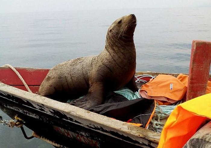 Pecheurs russes phoque grimper bateau 2
