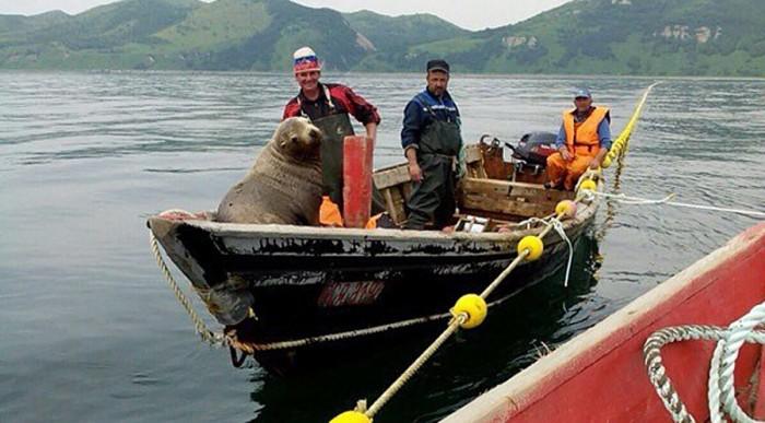 Pecheurs russes phoque grimper bateau 3