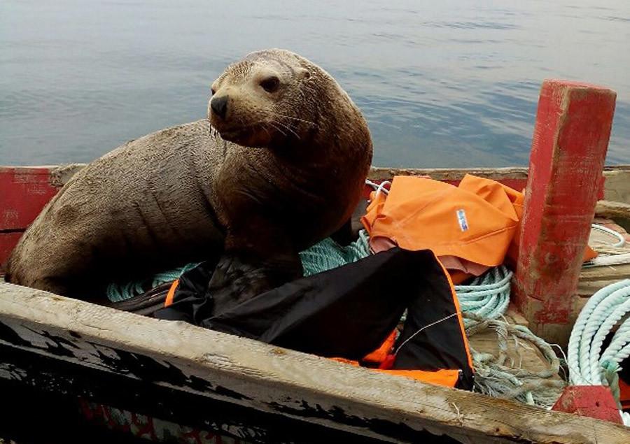 Pecheurs russes phoque grimper bateau 4