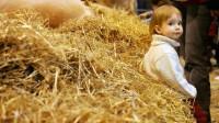 Une nouvelle piste de prévention de l'asthme:la poussière des fermes en protège les enfants