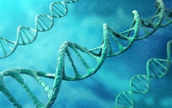 suppression gènes ralentir vieillissement augmenter espérance vie