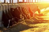 Manger moins de viande: une mesure cruciale contre le «réchauffement»