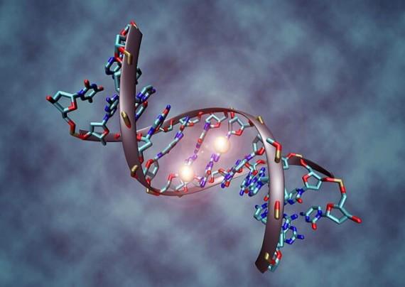 humains génétiquement modifiés deux ans Editas Medicine