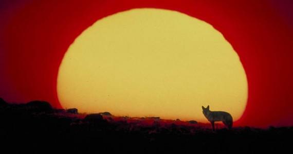 Vers la COP21: le «réchauffement climatique» comme un effort de guerre