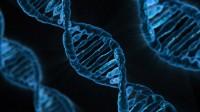 Une séquence ADN.