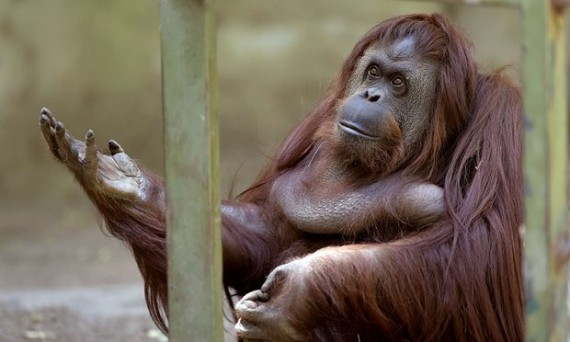 zoo Buenos Aires ferme captivité dégradante