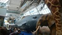 On a nettoyé les verrières du Natural History Museum d'Oxford: les squelettes conservés subissent des dommages irréparables
