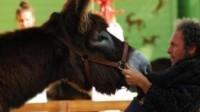 Voies sur berges piétonnes: Anne Hidalgo persiste, seule contre tous