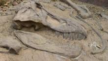 Des fossiles de stromatolithes qui posent des problèmes à l'évolutionnisme: trop vieux!