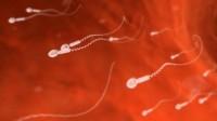Pilule masculine: une «découverte étonnante» accélère son élaboration