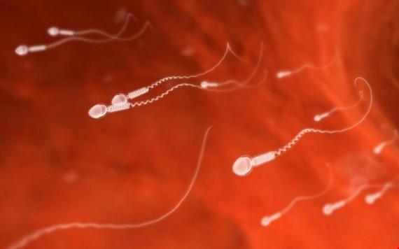 Pilule masculine découverte étonnante accélère élaboration