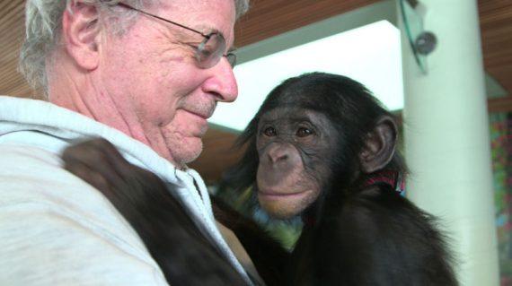 libérer chimpanzés personnes non humaines