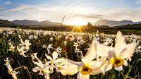 (Auvergne au printemps)