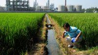 La Banque mondiale va prêter 100 millions de dollars à la Chine pour réduire la pollution aux métaux lourds dans ses rizières