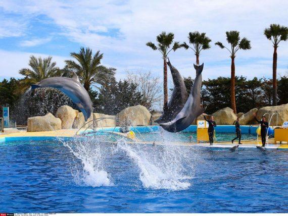 Interdiction Naissance Dauphins Captivité Conseil Etat Révolution Droit Animal