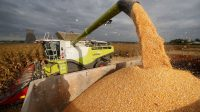 Un raté de l'UE oblige des agriculteurs à stocker des céréales destinées au marché des biocarburants