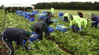 Les entreprises qui s'appuient sur des travailleurs de l'UE ont mis en garde contre l'impact «catastrophique» des propositions visant à réduire les migrations non qualifiées le jour où la Grande-Bretagne quitte l'UE.