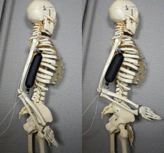 muscle artificiel capable porter 1000 fois poids