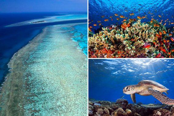 Grande barrière corail mieux surprise