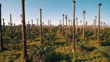 «Les conducteurs de voitures et de camions de l'UE sont les plus gros consommateurs d'huile de palme en Europe et ils ne le savent pas»