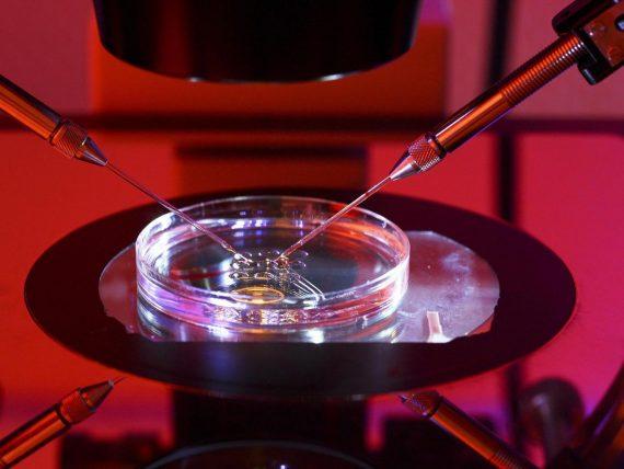 possibilité éditer ADN ARN guérison milliers maladies génétiques