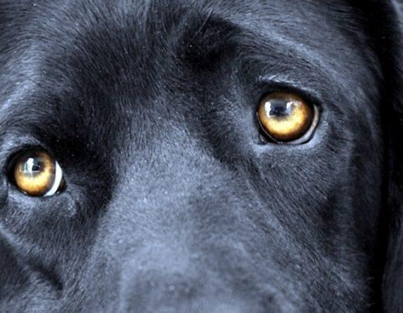 regards implorants chiens maîtres humains