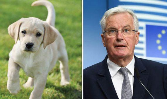 Brexit Michel Barnier menace propriétaires animaux compagnie
