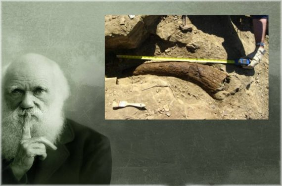 Tissus mous dinosaure chronologie longue évolution Mark Armitage licencié université