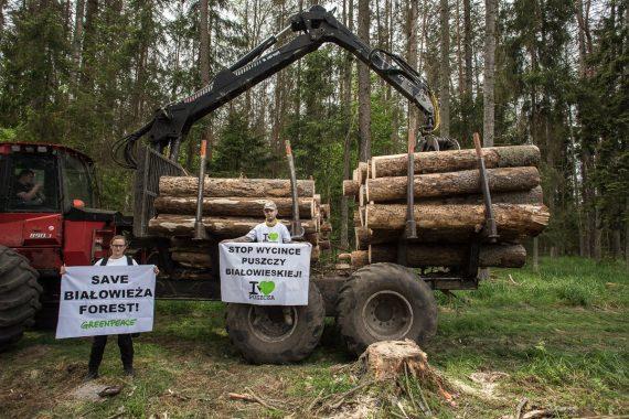 écologistes Commission européenne Forêt Białowieża Pologne