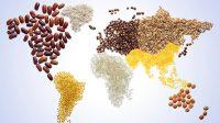 La production mondiale de céréales va de record en record: le CO2, précieux allié de la nourriture des hommes