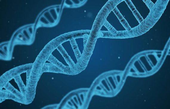 Europe 3 millions dollars étude turque ADN anatolien ère néolithique
